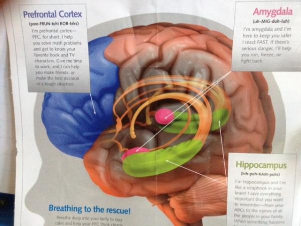 MindUp Brain Poster